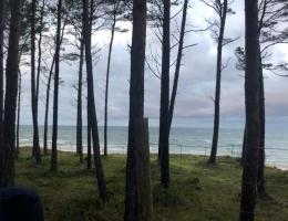 Las w pobliżu plaży w Jantarze
